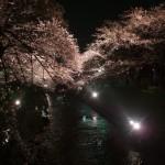"""五条川の""""夜桜"""""""