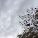冬と鳥の巣